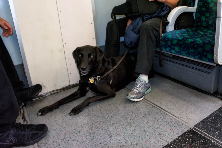 Gigi rides the DLR.  Dogs can ride London's metro system,